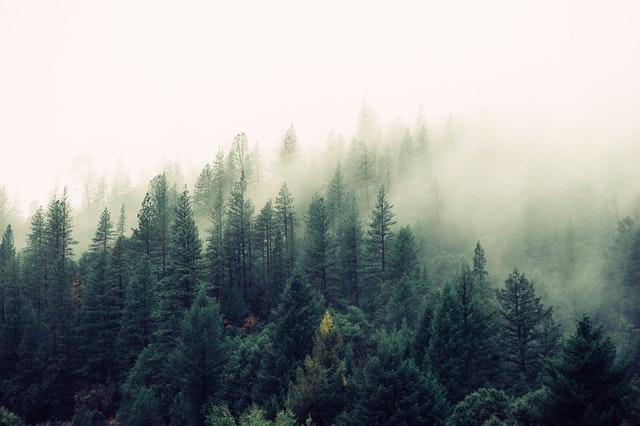 tåget skovområde