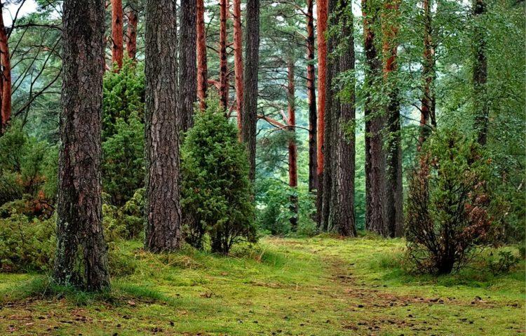 Skov natur
